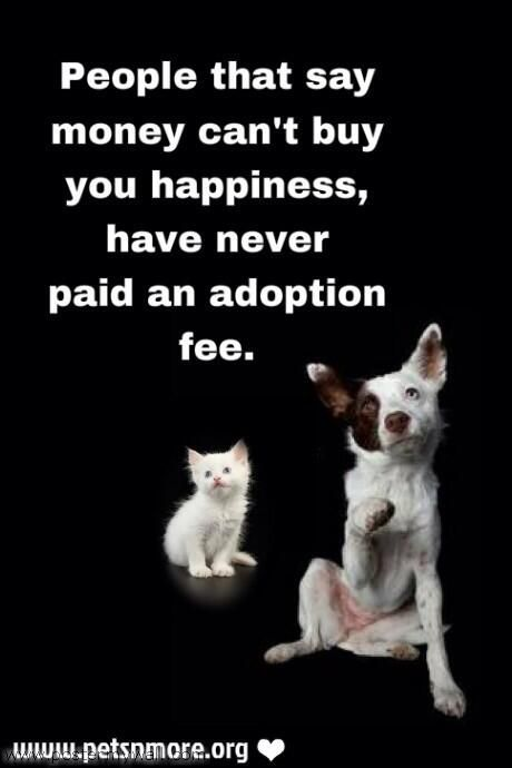 What Should I Say When Wanting To Adopted A Cat